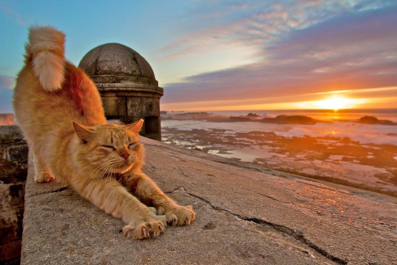 Chat, coucher de soleil, Essaouira, Maroc, Paysages