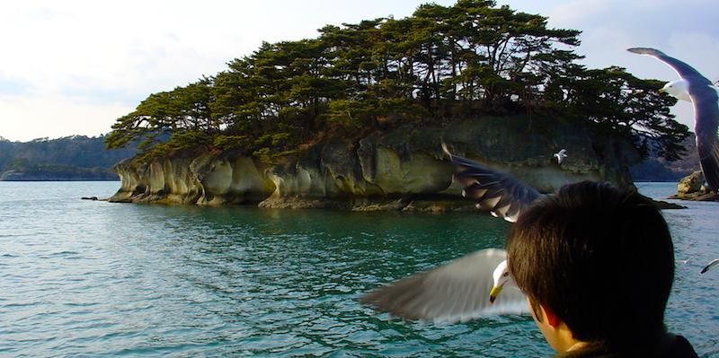 Archipel de Matsushima et goéland à queue noire (Larus crassirostris) - Archipel de Matsushima - préfecture de Miyagi - région de Tōhoku- Japon. Un des nombreux endroits touchés par le tsunami de 2011.