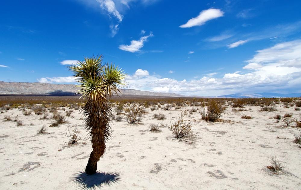 Désert de Mojave & Yucca - Midland Trail - Californie