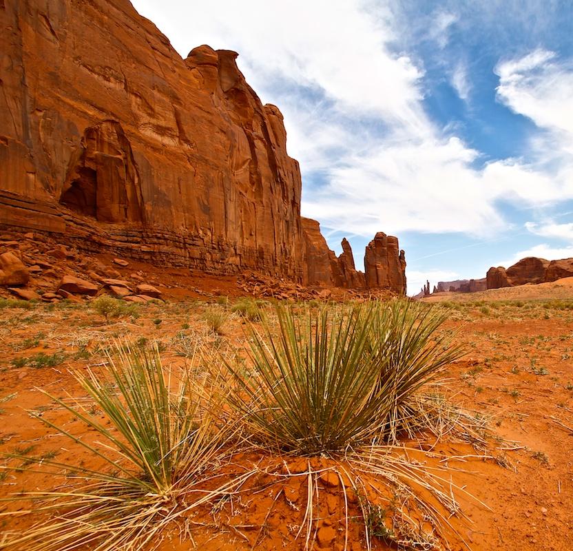 Yuccas Navajo
