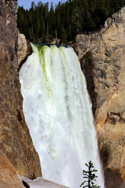 Lower falls+Yellowstone