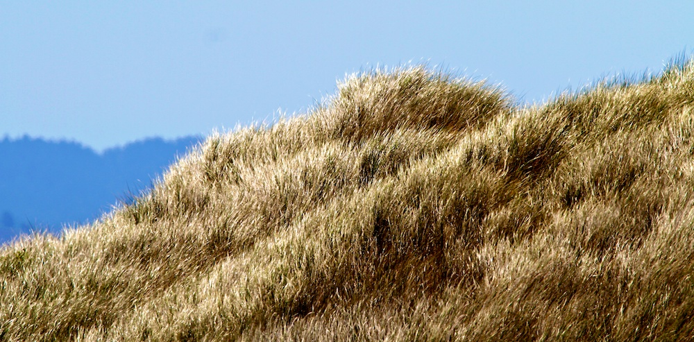 Dune, vent, Point Reyes, Californie