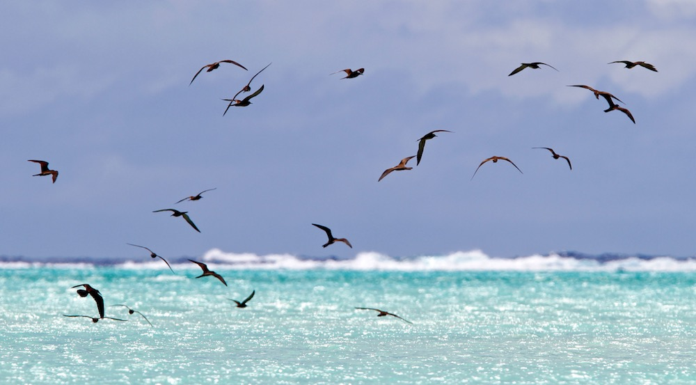 ile aux oiseaux, Tetiaroa