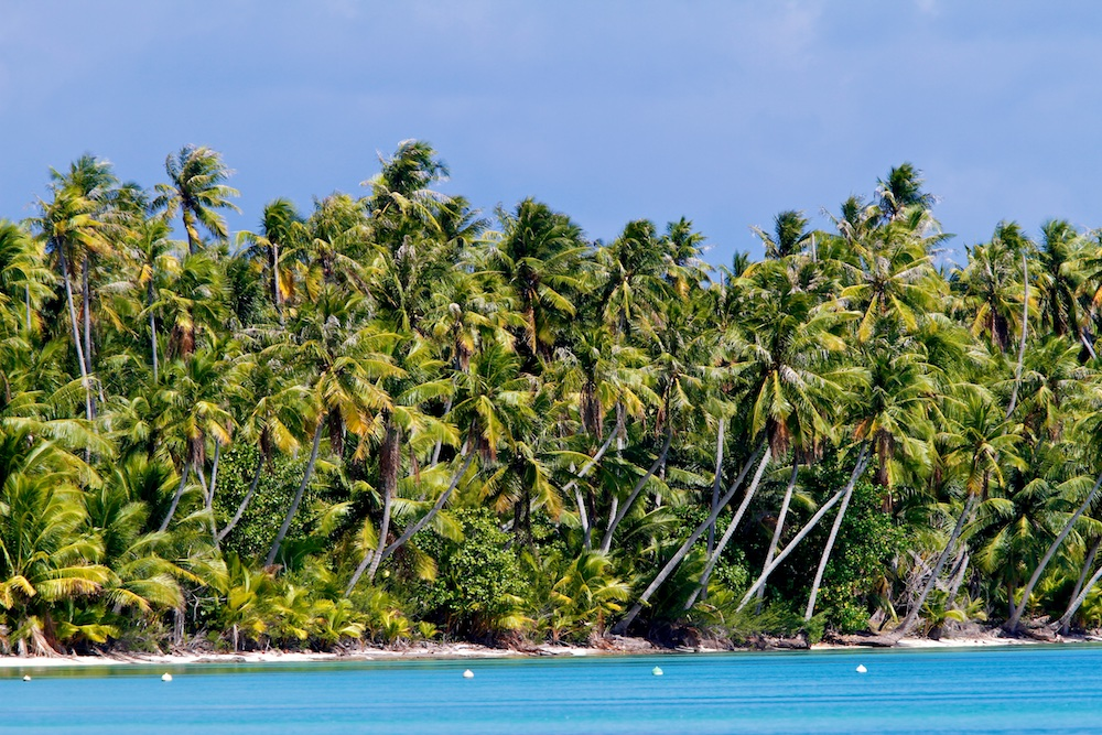 cocotier, Ahe, Tuamotu