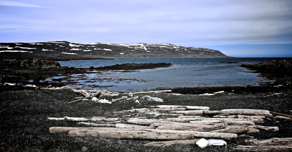 Driftwood, Iceland, bois flotté, Islande