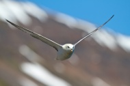 Oiseaux, Islande, fjord